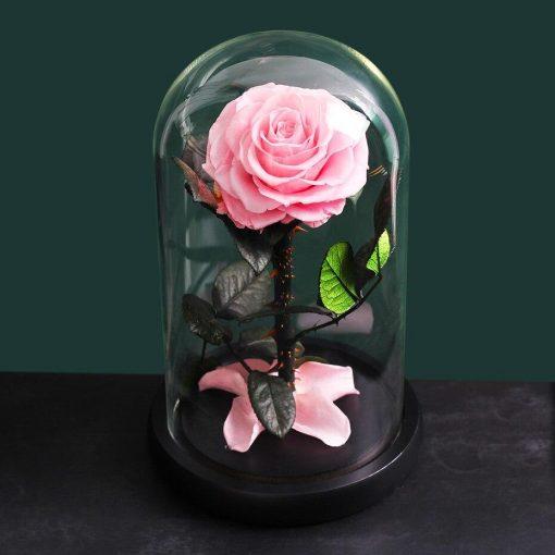 Rose Éternelle Dome